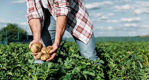 Ambioteco Rolnictwo
